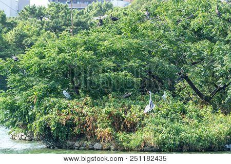 Ohori Park Birds Island