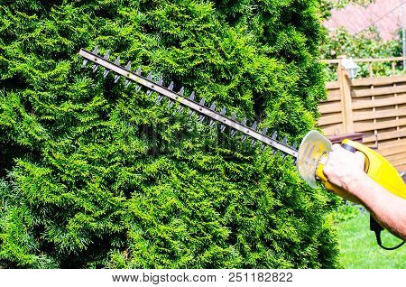 Care Of The Garden. Cutting Bushes And Conifers. Studio Photo