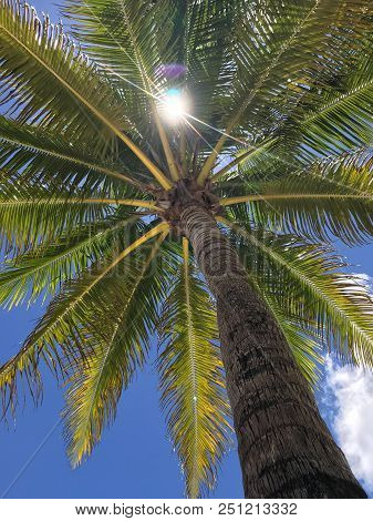 Leaves Of A Palm Tree With Sky And Sunrays