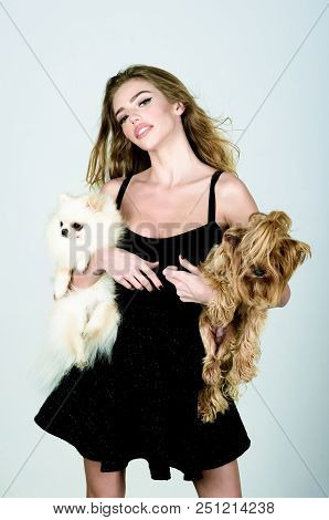 Stylish Girl In Little Black Dress With Two Dog In Hands. Woman With Pet Puppys. Beautiful Woman And