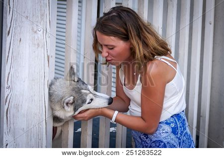 Beautiful Caucasian Girl Gently Caressing A Siberian Husky Dog Puppy. Girl Owner Caressing Gently He