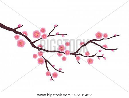 Cherry  blossom in spring time