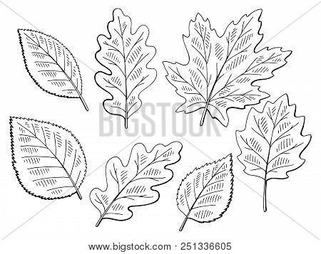 Tree Leaf Set Graphic Black White Isolated Sketch Illustration Vector