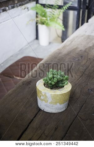 Cactus In Cement Pot On Wooden Table, Stock Photo