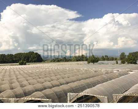 Greenhouses For Fruit And Vegetables In The Countryside. Sheds For Growing Vegetables In The Verones