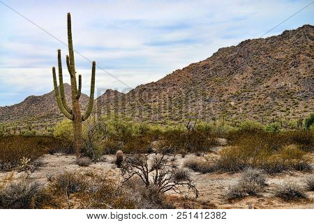 The Sonora Desert And San Tan Mountains In Central Arizona Usa