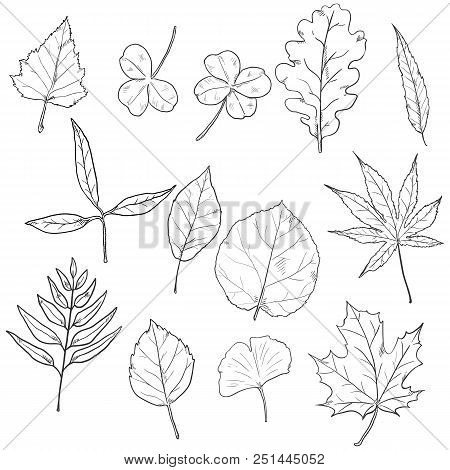 Vector Set Of Sketch Tree Leaves.
