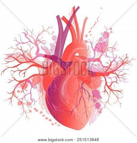 Vector Realistic Human Heart, Internal Organ. Anatomy Concept