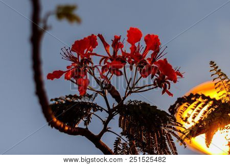Travel Photo In St. Barths, Caribbean. Close-up Photo Of A Red Flower With A Street Lamp In The Righ