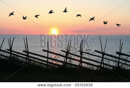 Group of birds flying in formation in front of sunset. poster