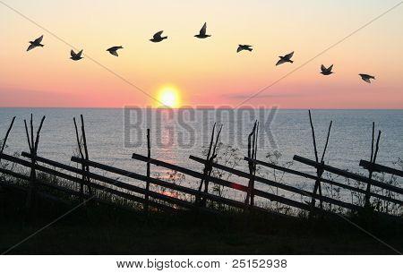 Fågel-formationen i solnedgången