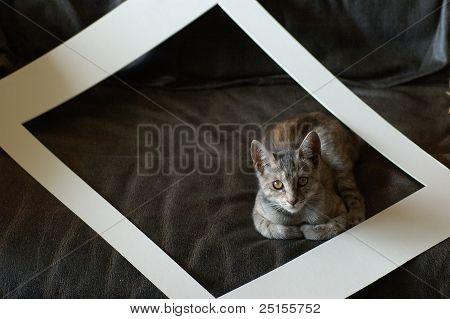 A cat got framed.