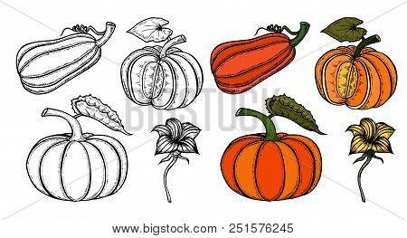 Pumpkin Autumn Collection. Ripe Whole Pumpkins, Pieces, Seeds, Flowers, Foliage, And Curls. Set On W