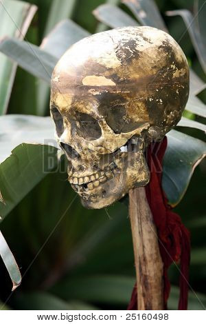Human Skull Of Victim