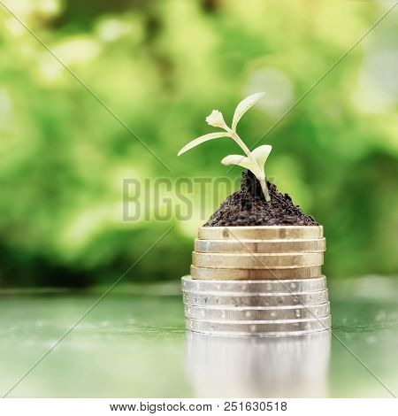 Coins In Soil With Young Plant On Green Background. Money Growth Concept. High Key Filter