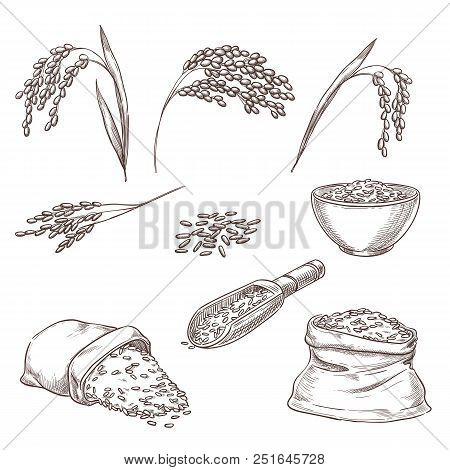 Rice Cereal Spikelets, Grain In Sack And Porridge In Bowl. Vector Sketch Illustration. Hand Drawn Is