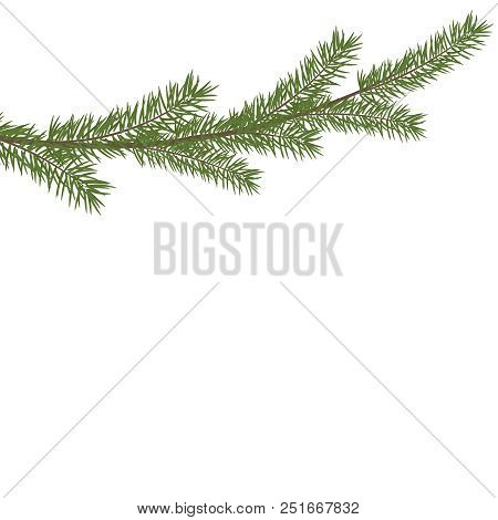 Christmas Tree Branche In The Corner. Green Fir Tree Branch. Realistic Vector Christmas Pine Tree Br