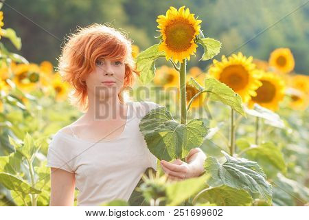 Red-haired Girl Hugging A Tall Sunflower At Sunset, Young Redheaded Woman In The Field Of Sunflowers