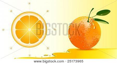 deatailed orange anatomy