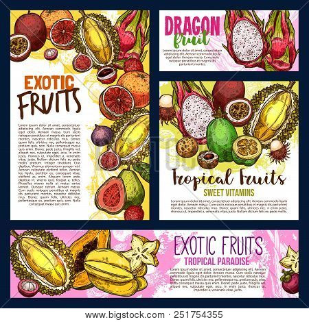 Exotic Fruits Sketch Banners And Posters Of Durian, Papaya Or Mango And Mangosteen. Vector Harvest O