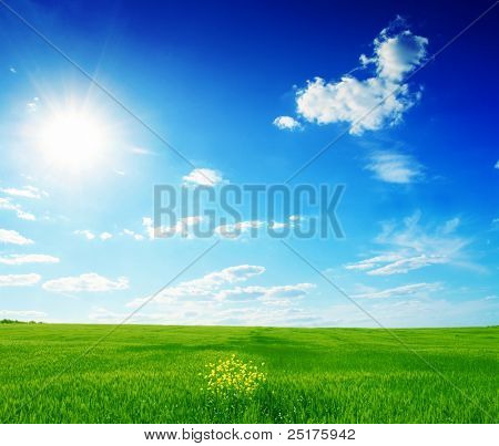 field of green grass and blue sun sky