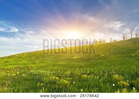 in the evening in flowerings meadows