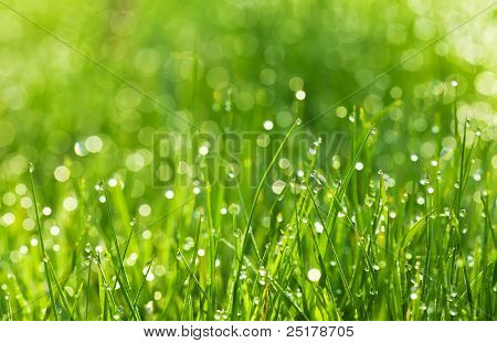 drops of dew on a green grass