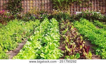 Vegetable Garden In Late Summer. Herbs, Flowers And Vegetables In Backyard Formal Garden. Eco Friend
