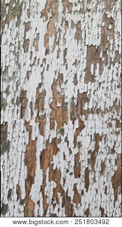 Old Dirty Wooden Wall With Leftovers Of White Layer And Green Layer Cracked Paints. Grunge Painted W