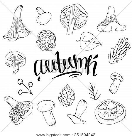 Set Of Autumn Objects Black And White Mushrooms With Lettering