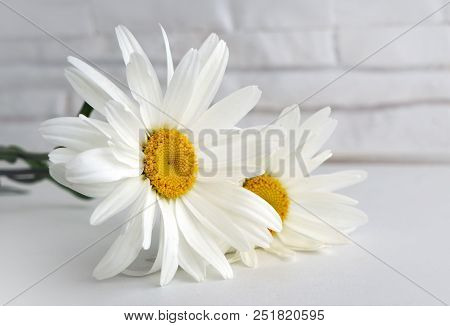 Beautiful Flower Camomile