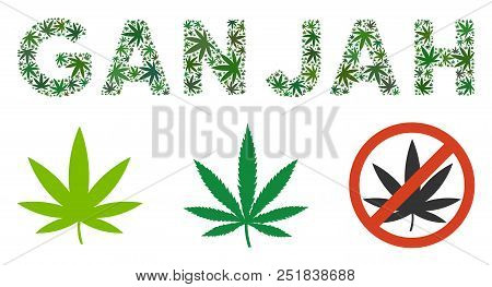Ganjah Text Composition Of Cannabis Leaves In Various Sizes And Green Tints. Vector Flat Weed Leaves