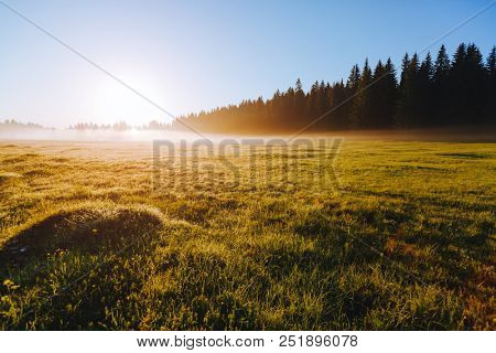 Fantastic misty pasture in the sunlight. Locations place Durmitor National park, village Zabljak, Montenegro, Balkans, Europe. Scenic image of concept of a farming. Discover the beauty of earth.