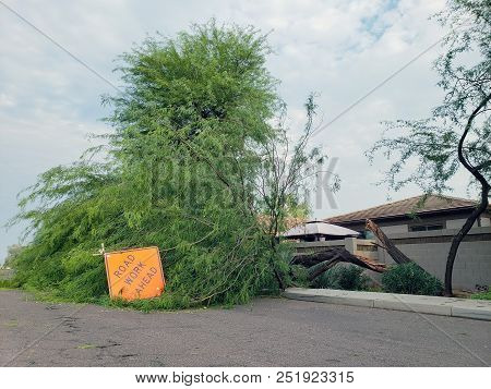 Residential Street With A Fallen Old Mesquite Tree After Annual Summer Monsoon Storm In Phoenix, Ari
