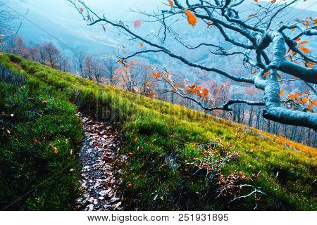 Majestic beech branches with orange leaves at autumn mountains. Ideally as a background. Carpathians, Ukraine, Europe.