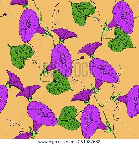 Vector Colored Pattern With Violet Bindweed On Bright Background. Vintage Flowers.