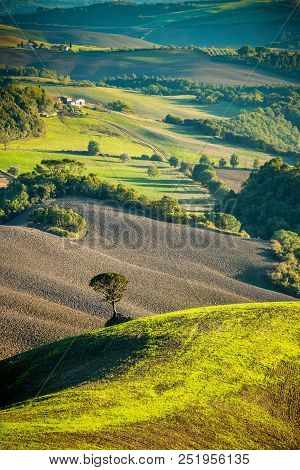 Lonely Tree In A Tuscan Valey At Sunset