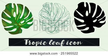 Flat Set Of Tropical Leaf. Detailed Sketch Of Tropical Leaf, Outline Of Tropical Leaf And Color Vect