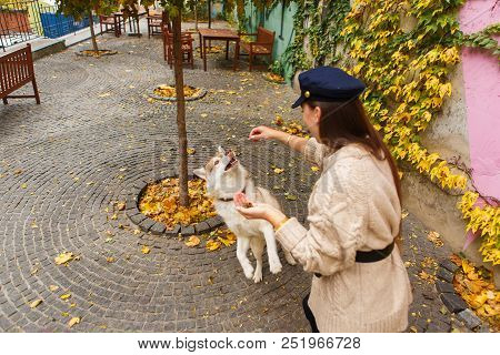 Playful Dog Eating From Female Hand - Woman Feeding Husky At City Park. Jumping Pet Get Its Reward