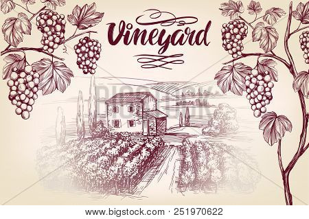 Grape Vine, Vineyard, Grape , Calligraphy Text Hand Drawn Vector Illustration Realistic Sketch.