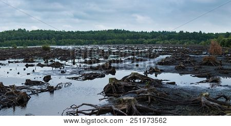 Panorama Of Blakemere Moss In Delamere Forest, Cheshire, Uk. After A Long Spell Of Hot Weather The W