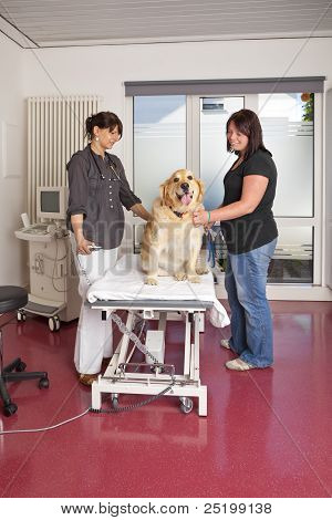 A veterinarian preparing the examination table with a golden retriever for ultrasonic examination poster