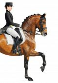 Equestrian sport - dressage (closeup, isolated on white) poster