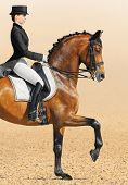 Equestrian sport - dressage (closeup of young woman and chestnut stallion) poster