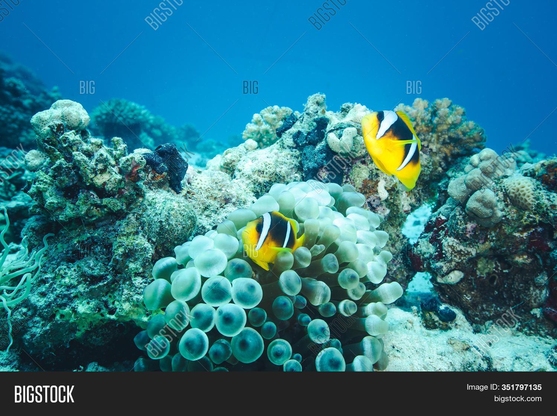 Underwater World Image Photo Free Trial Bigstock