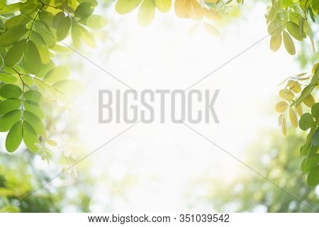 Green Leaf Nature On Blurred Greenery Background. Beautiful Leaf Texture In Bokeh Sunlight. Natural