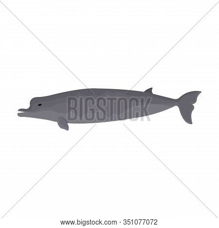 Whale Northern Swimmer Vector Icon.cartoon Vector Icon Isolated On White Background Whale Northern S