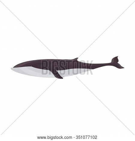 Whale Finwal Vector Icon.cartoon Vector Icon Isolated On White Background Whale Finwal .