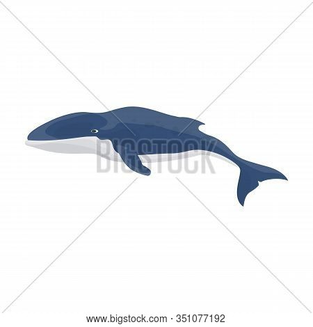 Blue Whale Vector Icon.cartoon Vector Icon Isolated On White Background Blue Whale.