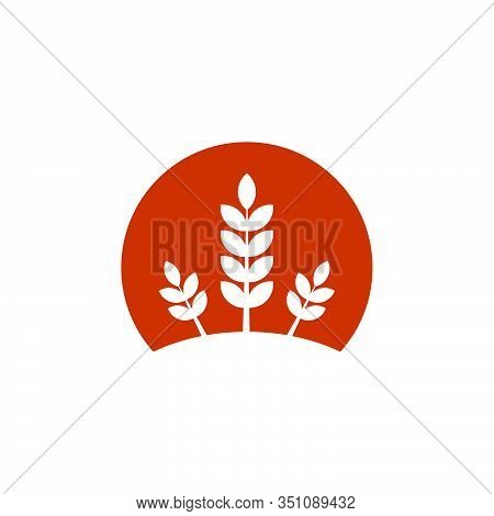 Wheat Or Barley Ears. Harvest Wheat Grain, Growth Rice Stalk And Whole Bread Grains Or Field Cereal